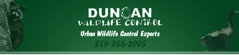 Duncan Wildlife Control - Urban Wildlife Control Experts